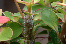 Desert Rose Pest Control Related Keywords & Suggestions